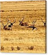 Garden Of Elk Canvas Print
