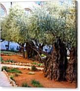 Garden Of Gethsemane Canvas Print