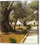 Garden Of Gethsemene Jerusalem Canvas Print