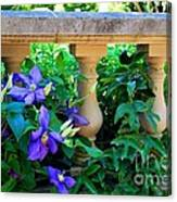 Garden Wall With Periwinkle Flowers Canvas Print