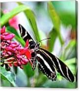 Garden Zebra Longwing Canvas Print