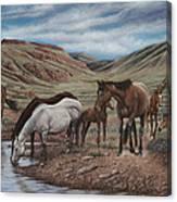 Gathering At Diablo Canyon Canvas Print
