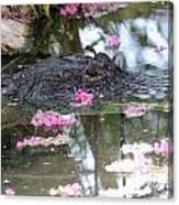 Gator Among Crape Myrtle Canvas Print