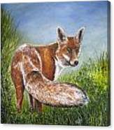 Gazing Fox Canvas Print