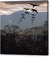 Geese At Dusk Canvas Print