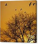 Geese At Sunrise Canvas Print