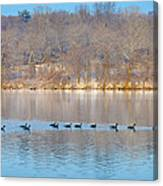 Geese In The Schuylkill River Canvas Print