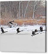 Geese Take Flight Over The Maumee River Canvas Print