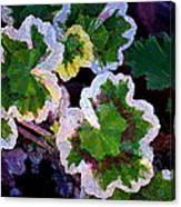 Geranium 6 Canvas Print