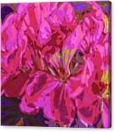 Geranium Pop Canvas Print