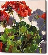 Geraniums And Shadows Canvas Print