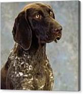 German Pointer Portrait Of A Dog Canvas Print