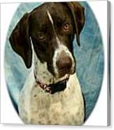 German Shorthaired Pointer 088  Canvas Print