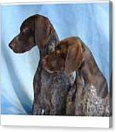 German Shorthaired Pointer 306 Canvas Print