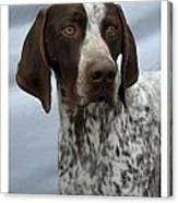 German Shorthaired Pointer 442 Canvas Print