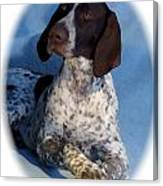 German Shorthaired Pointer 790 Canvas Print