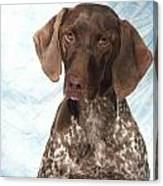 German Shorthaired Pointer 953 Canvas Print