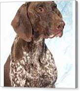 German Shorthaired Pointer 960 Canvas Print