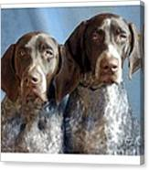 German Shorthaired Pointers 127 Canvas Print