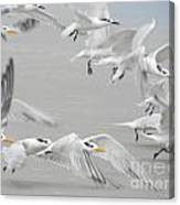 Get The Flock Outta Here Canvas Print