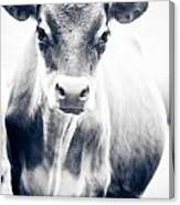Ghost Cow 1 Canvas Print