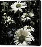 Ghostly Daisies Canvas Print