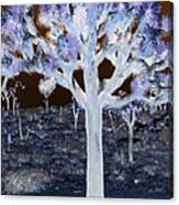 Ghostly Joshua Tree Canvas Print
