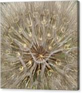 Giant Dandelion Canvas Print