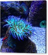 Giant Green Sea Anemone Canvas Print
