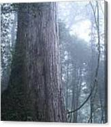 Giant In Fog Canvas Print