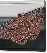 Giant Moth Canvas Print