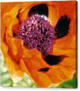 Giant Orange Poppy Canvas Print
