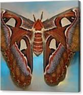 Giant Silk Moth Canvas Print