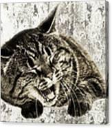Giggle Kitty  Canvas Print