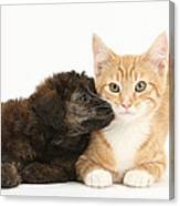 Ginger Kitten And Toy Poodle Canvas Print