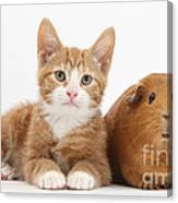 Ginger Kitten With Red Guinea Pig Canvas Print