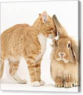 Ginger Kitten With Sandy Lionhead Rabbit Canvas Print