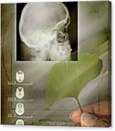 Ginkgo In Medicine Canvas Print
