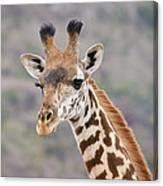 Giraffe Close-up Canvas Print