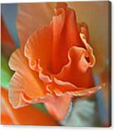 Gladiola Bloom Canvas Print