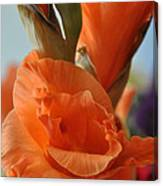 Gladiola Blooms Canvas Print