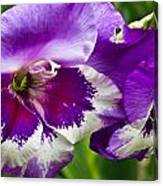 Gladiola Blossom 2 Canvas Print