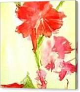 Gladiola Canvas Print
