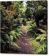 Glanleam, Co Kerry, Ireland Path In The Canvas Print