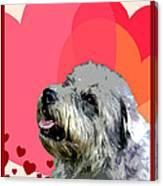 Glen Of Imaal Terrier Canvas Print