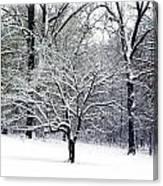 Glenna's Dogwood In The Snow Canvas Print
