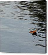 Gliding Across The Pond Canvas Print