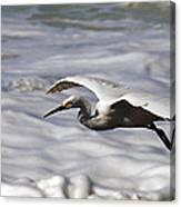 Gliding Snowy Egret Canvas Print