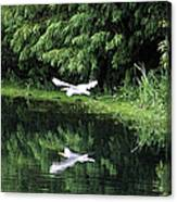 Gliding Through The Swamp Canvas Print