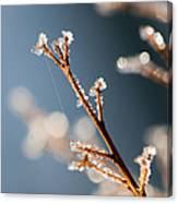 Glistening Ice Crystals Canvas Print